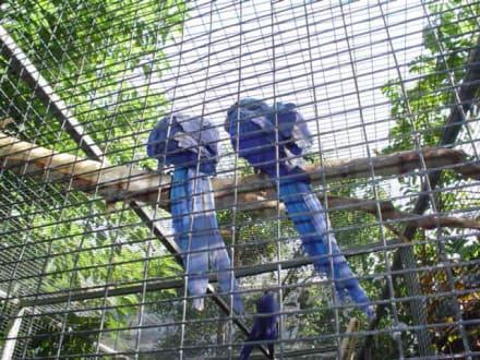 Papageien - Loro Parque
