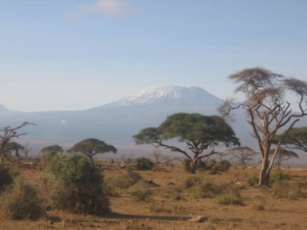 Blick zum Kilimanjaro - Nationalpark Kilimandscharo / Kilimanjaro