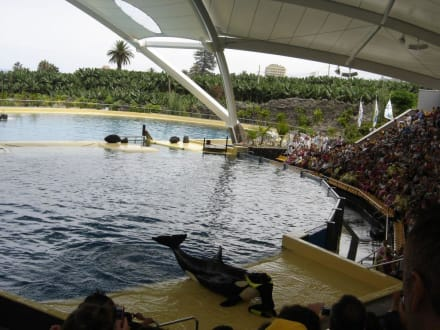 Orca Show - Loro Parque