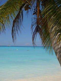 Strand und Meer - Isla Saona