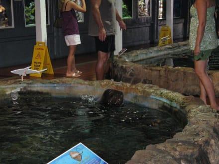 Becken im Key West Aquarium - Key West Aquarium