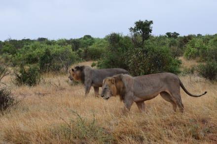 Tsavo Ost und West Safari - Tsavo Ost und West Safari