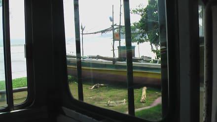 Aussicht vom Bus  - Transport