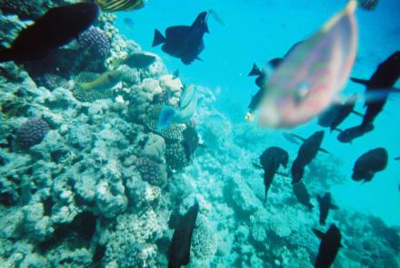 Unterwasser - Tauchkreuzfahrt