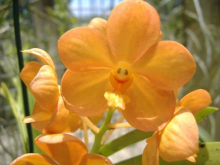 Orchidee - Orchid World