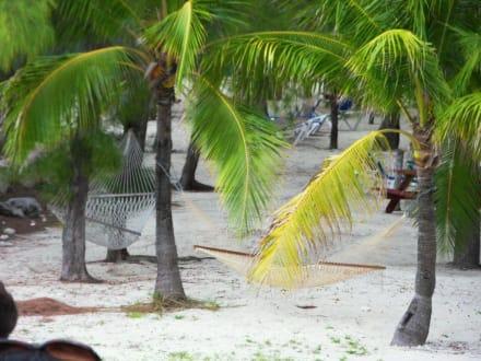Beach/Coast/Harbor - Coco Cay Beach