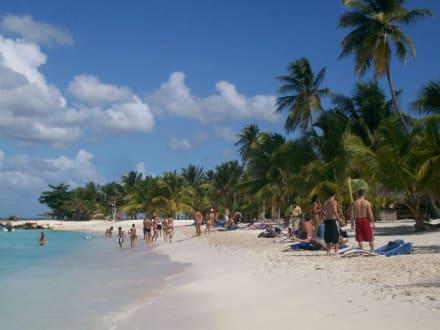 Willkommen in der Karibik! - Isla Saona