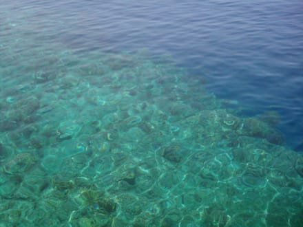 Reefs/Corals -