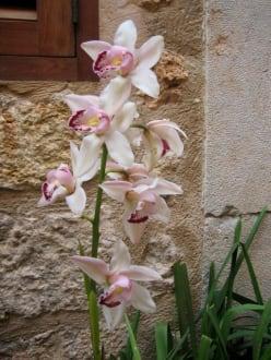 Fornalutx - Orchideen vor der Haustür - Bergdorf Fornalutx