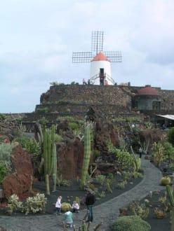 Blick in den Jardín de Cactus - Jardin de Cactus / Kaktusgarten Guatiza