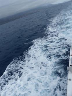 Fahrt zurück - Whale Watching
