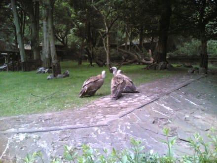 Geier - Zoo Duisburg