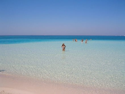 Paradise Insel vor Hurghada - Giftun / Mahmya Inseln