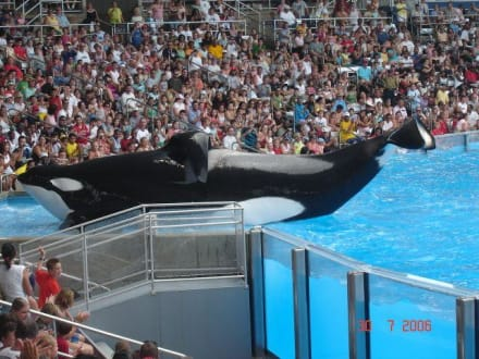 Shamu-Show in Sea World Orlando - Sea World