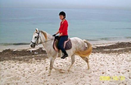 Ausritt auf Selvina am Strand - Ranch Mabrouka