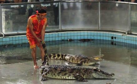 Show - The Million Years Stone Park & Crocodile Farm