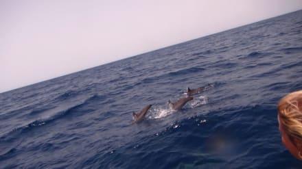 Delfin Tour Marsa Alam - Delfin Tour Marsa Alam