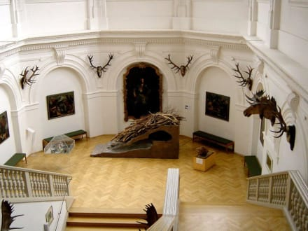 Deutsches Jagd- und Fischereimuseum München - Deutsches Jagd- und Fischereimuseum