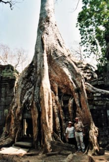 Riesiger Baum - Tempel Ta Prohm