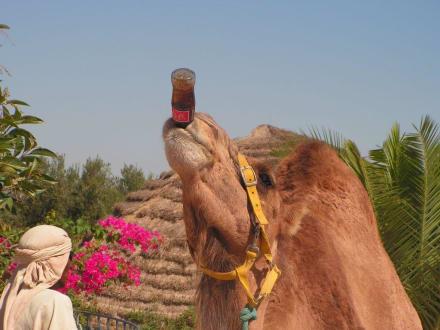 Kamel-Caravane - Kamelreiten Port El-Kantaoui