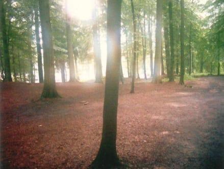 Waldgebiet im Tippi Dorf Lahntal - Tipi-Dorf
