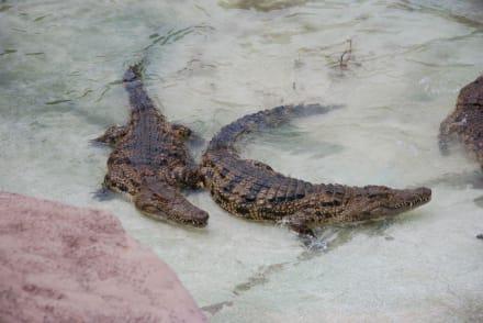 Krokodile - Reitschule Rancho Texas