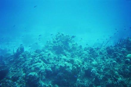 Unterwasseraufnahme vom Riff vor Cozumel - U-Boot Tour Atlantis Isla Cozumel