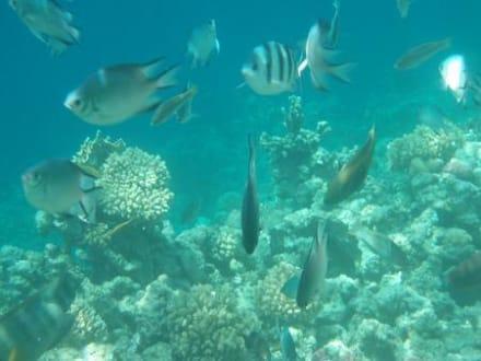 Unterwasserimpressionen - Tauchen Makadi Bay