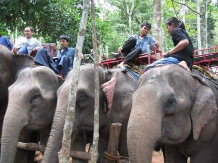 Elefanten - Elefantentrecking