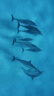 Ausflug  - Delfin Tour Marsa Alam