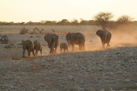 Elefantenfamilie im Anmarsch zum Wasserloch - Etosha Nationalpark