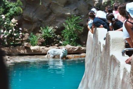 Weißer Tiger - Loro Parque