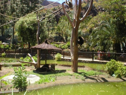 Palmitos Park - Palmitos Park