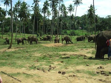 Elefantenpark - Elefantenwaisenhaus Pinnawela