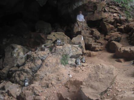 Grottentempel - Wat Suwan Kuha Tempel