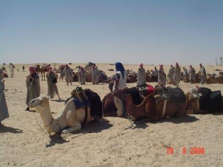 Kamelbahnhof - Sahara