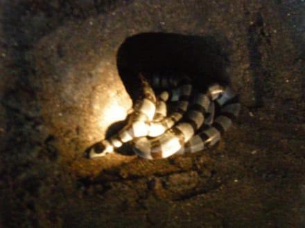 Die heilligen Schlangen - Tempel Tanah Lot