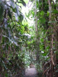 Dschungel Park - La Vanille Crocodile Park