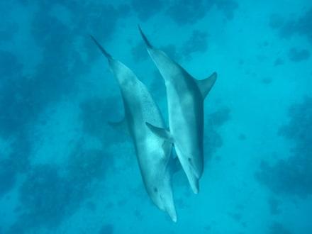 Magie pur - Delfinschwimmen Delfine & Meer