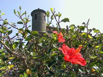 Castillo de San Jose - Castillo de San José