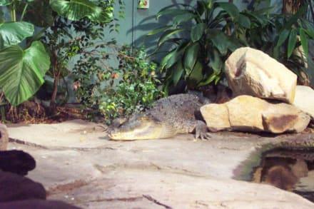 Krokodil in Aktion - Sydney Aquarium