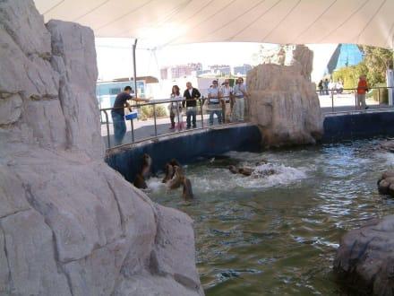 Im Aquarium - Aquarium / Oceanongrafic