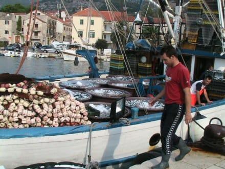 Fischkutter - Hafen Bol