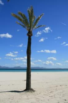 Alcudia Strand - Strand Alcudia