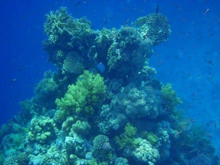 Einfach ein tolles Riff - Tauchen Sharm el Sheikh