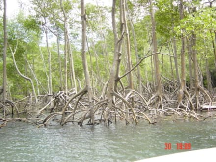 Mangroven - Los Haitises Nationalpark