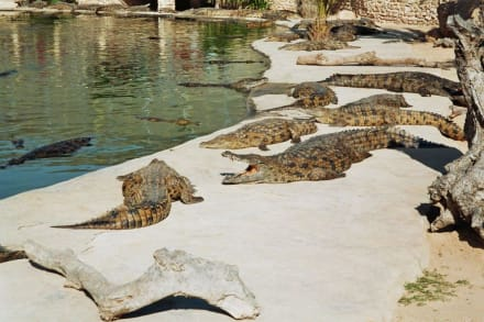 Ausflug zur Krokodilfarm - Krokodilfarm Animalia