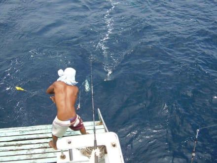 Blick von oben - Big Game Fishing