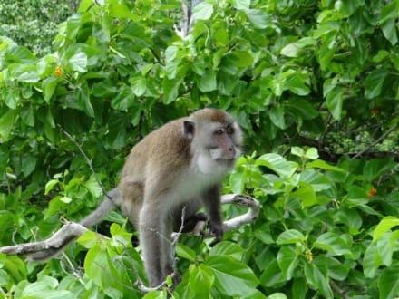 Bewohner der Insel - Monkey Island