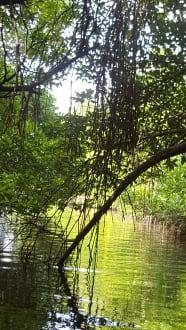 Bentota River - Bentota Fluss- und Mangroven Tour